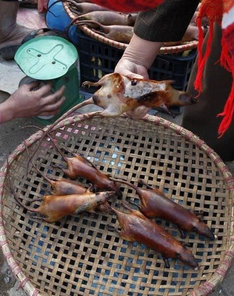 крысы во вьетнаме на улицах фото необычным япете является