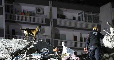 AFAD'ın kahraman köpekleri! İzmir'de hayat kurtarıyorlar...