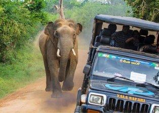 Safaride dehşet anları! Dev filin saldırısına uğradılar