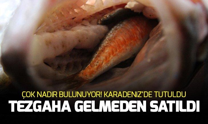 NADİR BULUNAN BALIK KARADENİZ'DE TUTULDU, TEZGAHA GELMEDEN SATILDI