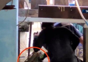 Evinin altından gelen ses dehşete düşürdü! Kapısını açınca 2 metrelik dev timsahla göz göze geldi