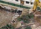 CHPli Maltepe Belediyesinde ağaç katliamı! Toprağa gömdüler
