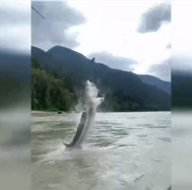 Balıkçılar şaştı kaldı! Dev balık...