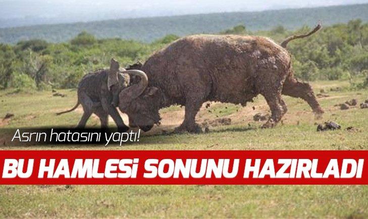 BUFALO ASRIN HATASINI YAPTI! O HAMLESİ SONUNU HAZIRLADI...