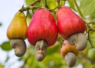 Uzmanlar uyardı! Bu besinler vücuda zehir saçıyor!