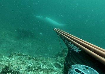 Denizde zıpkınla balık avı yaparken öyle bir şey kaydetti ki! Ters yüzen yunus balığı hayrete düşürdü