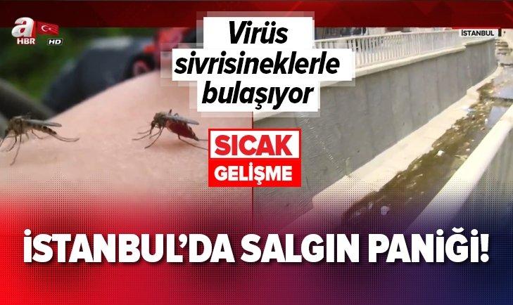 İSTANBUL'DA SALGIN HASTALIK PANİĞİ!