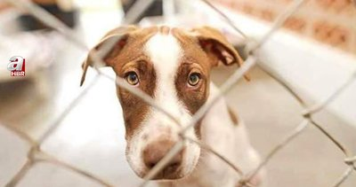 Hayvan hakları yasasında neler var? Yeni Hayvan Hakları yasası neleri kapsıyor, cezaları ne? İşte maddeleri...