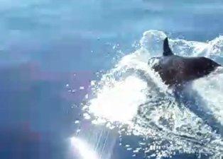 Denizde metrelerce takip ettiler! O anlar kamerada
