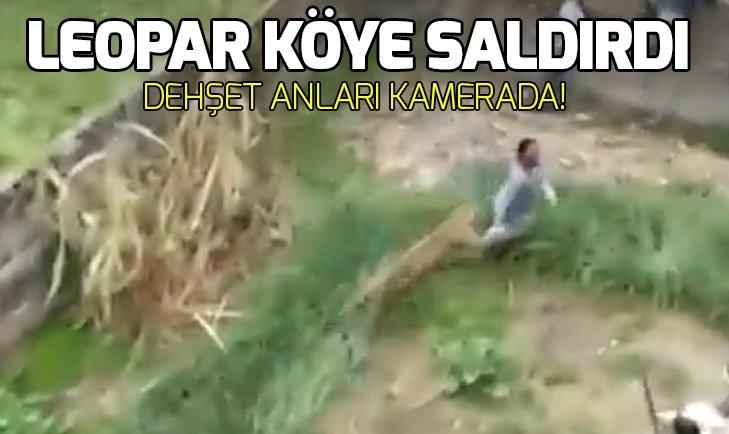 LEOPAR KÖYE SALDIRDI: 6 YARALI