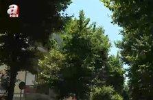 Mahallesine 60'dan fazla ağaç dikti!