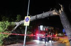 Çam ağacı devrildi tramvay seferleri durdu