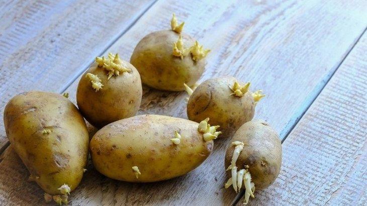 Dikkat! Bu patates ölüme neden oluyor