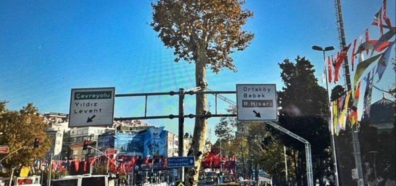 İBB Beşiktaş'taki 150 yıllık anıt çınarı yok etti! Tepki yağıyor: Mesele ağaç değil hala anlamadınız mı?