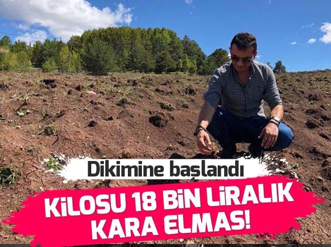"DÜNYADA ""KARA ELMAS"" OLARAK BİLİNEN TRÜF MANTARININ KİLOSU 18 BİN LİRA!"