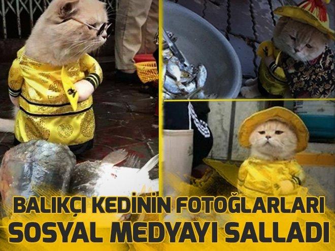 BALIKÇI KEDİNİN FOTOLARI SOSYAL MEDYAYI SALLADI