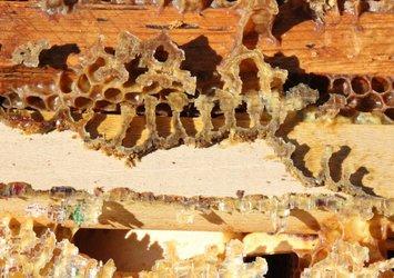 Son dakika: O ilimizde esrarengiz olay! Kovan ve peteklerde Allah lafzı! Bu şekilleri çizen arılar kayboldu