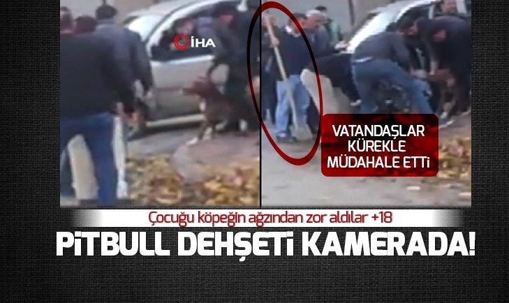 GAZİANTEP'TEKİ PİTBULL DEHŞETİ KAMERADA!