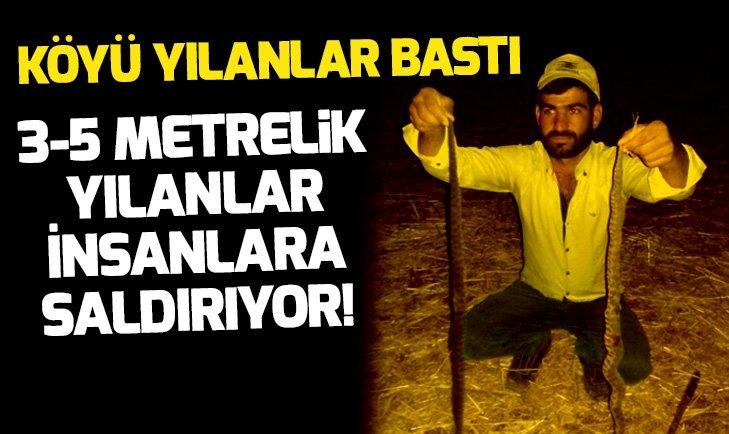 DİYARBAKIR'IN BAĞLAR İLÇESİ BAĞLI KÖYÜ YILANLAR BASTI!