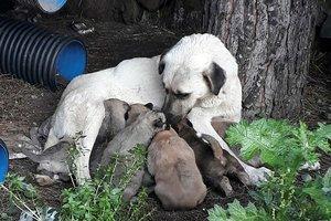 Erdek'te zehirli et verilen köpek ile 3 yavrusu ve 3 kedi öldü