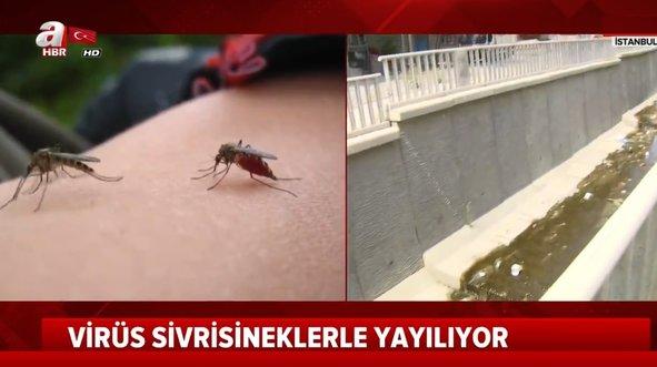 İstanbul'da salgın hastalık paniği!
