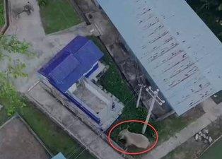 Polis karakolunu bastılar! Aç kalan dev filler karınlarını böyle doyurdu