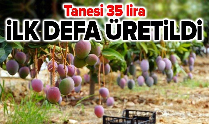 İLK DEFA ÜRETİLDİ! TANESİ 35 LİRA