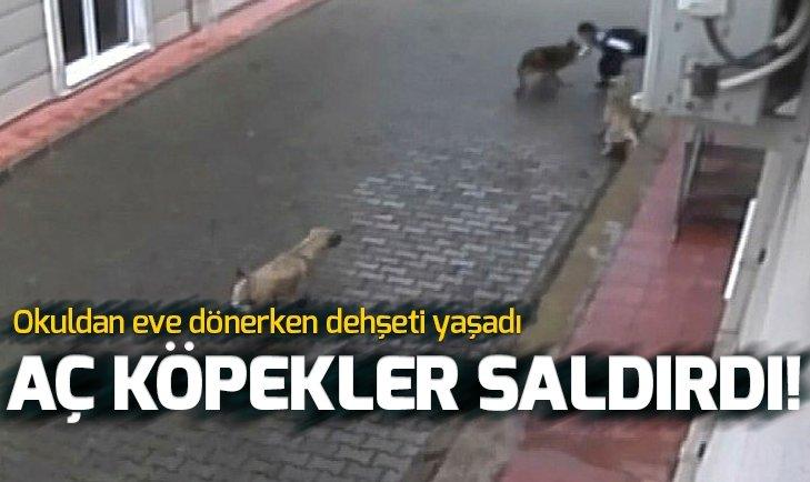 Aç kalan köpekler ilkokul öğrencisine saldırdı