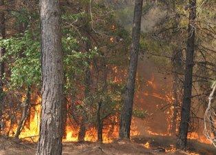 Manavgat, Marmaris, Fethiye... Türkiye'de yangın kabusu! İşte yangınlarla ilgili son gelişmeler...