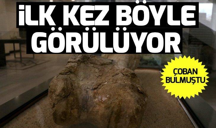 KAYSERİ'DE ÇOBAN BULMUŞTU! İLK KEZ BÖYLE GÖRÜLÜYOR