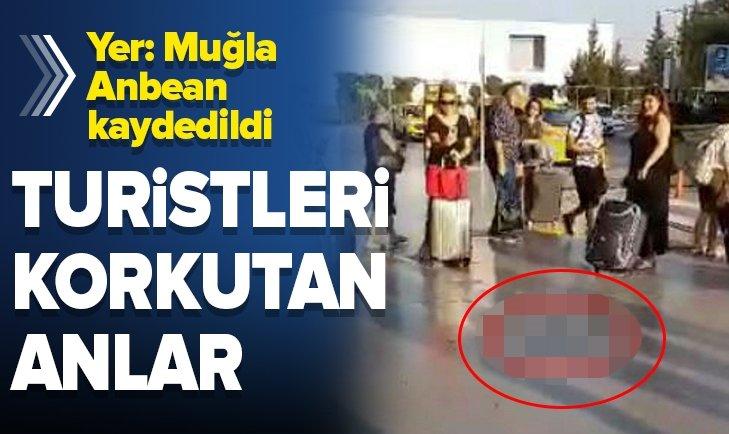 MİLAS- BODRUM HAVALİMANI'NDA YILAN PANİĞİ