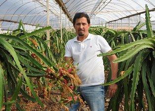 Antalyalı turizmci tavsiyesi üzerine ejder meyvesi ekti! Şimdi servet sahibi