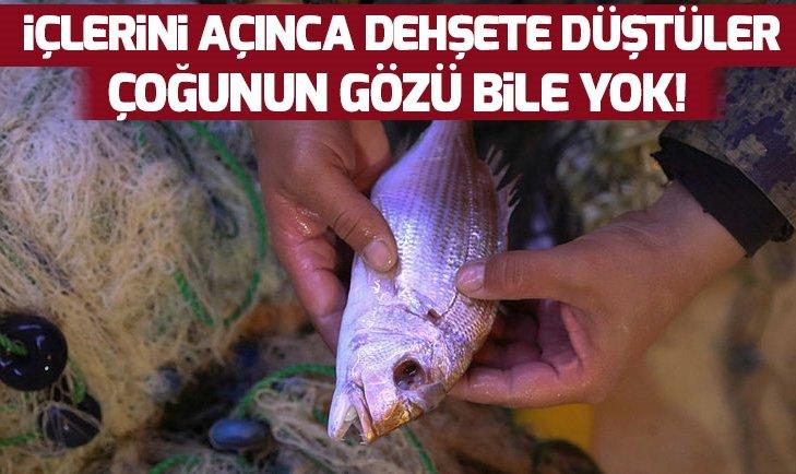 KOLONİLER HALİNDE SALDIRIP CANLI CANLI YİYORLAR!