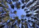 Tarım ve Orman Bakanlığı'ndan rekor hazırlığı: 3 milyon fidan aynı anda dikilecek