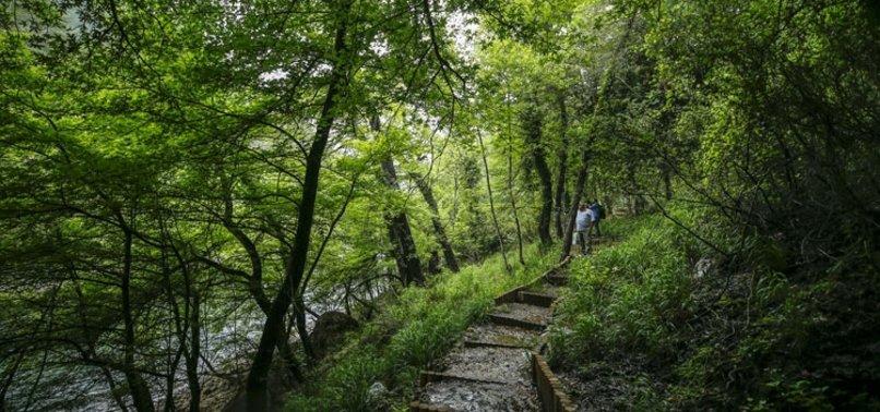 """Tarım ve Orman Bakanlığı duyurdu! 3,2 milyon hektar alana """"özel statülü"""" koruma"""