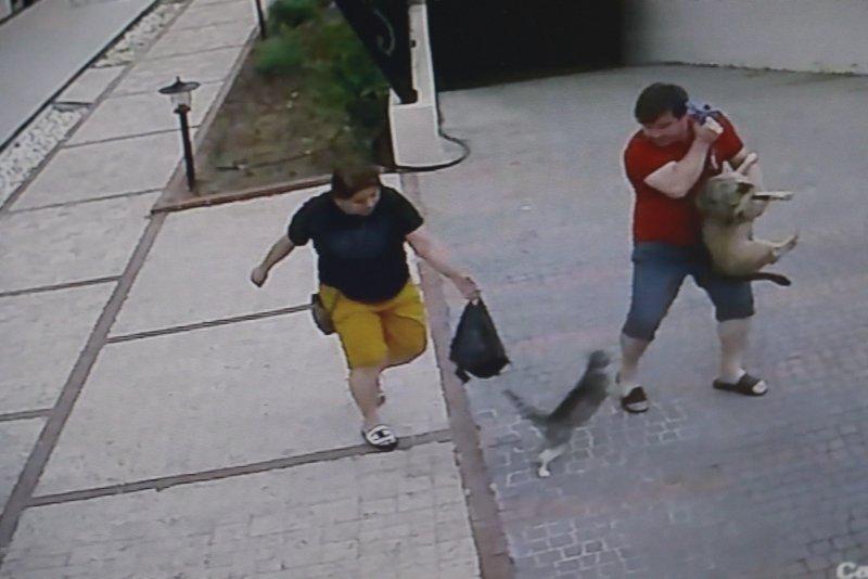 Antalya'da köpekli aileye saldıran kedi, hem korkuttu hem güldürdü ...