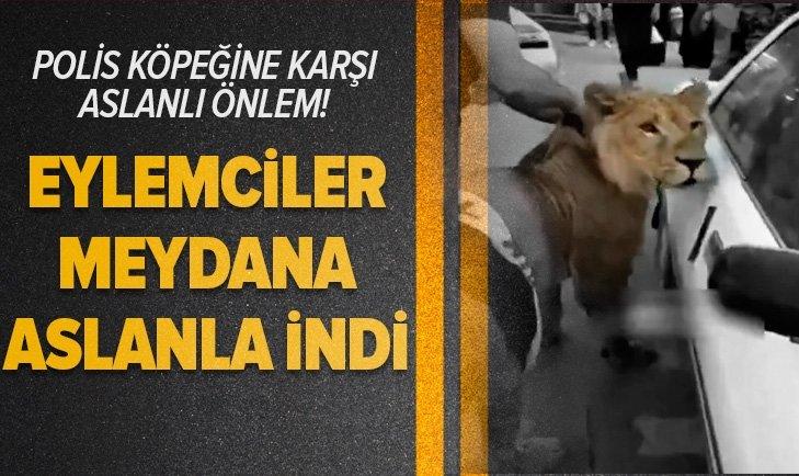 POLİS KÖPEKLERİNE KARŞI EYLEME ASLAN GETİRDİLER