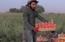 Orada domatesin kilosu 40 kuruş