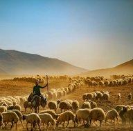 Son dakika tarım destek hibesi nasıl alınır? Tarım hayvancılık hibesi kimlere verilir?