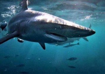Yamyam köpek balığının ölümcül karşılaşması! Rakibini yutmaya çalıştı ama...